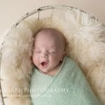 Jax, 8 weeks old – Hobart Baby Photographer